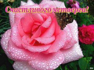Открытки доброе утро и счастливого дня006