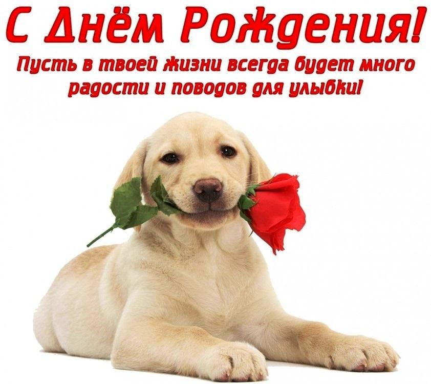 Открытка с собакой поздравляю