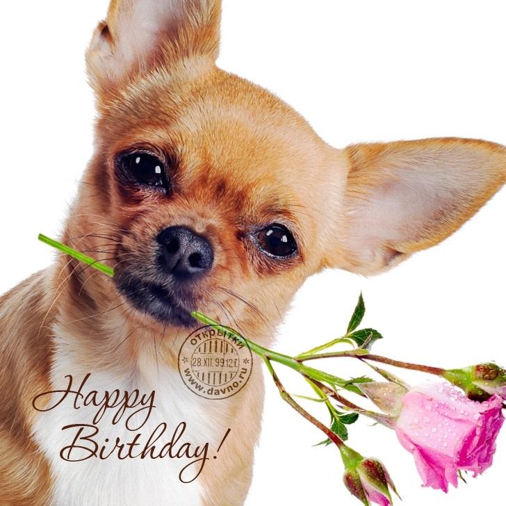 Красивые открытки животных с днем рождения женщине, мерцающие пожеланиями здоровья