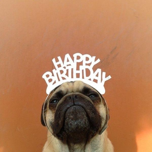 С днем рождения фото смешная картинка, хорошего дня