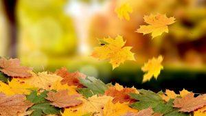 Очень красивая осень на рабочий стол 018