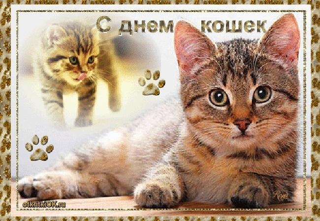 Поздравления с днем рождения открытки кошки002
