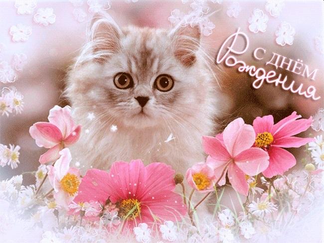 Поздравления с днем рождения открытки кошки003