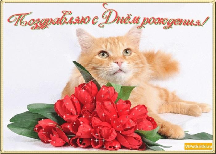 Поздравления с днем рождения открытки кошки004