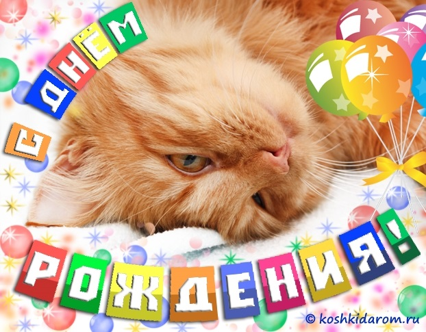 Поздравления с днем рождения открытки кошки005