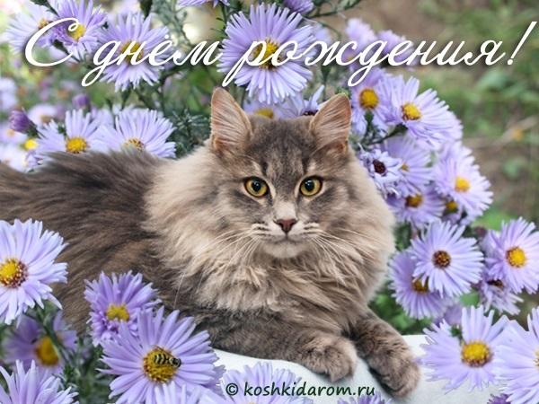 Поздравления с днем рождения открытки кошки006