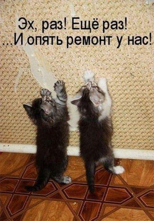 Поздравления с днем рождения открытки кошки009