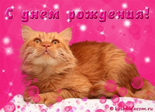 Поздравления с днем рождения открытки кошки010