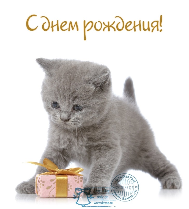 Поздравления с днем рождения открытки кошки011