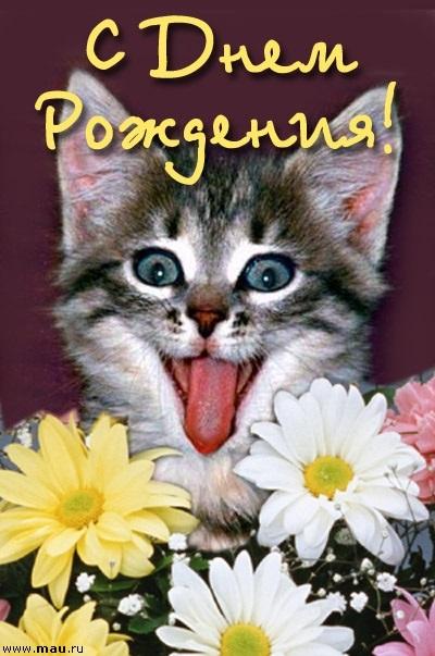 Поздравления с днем рождения открытки кошки012