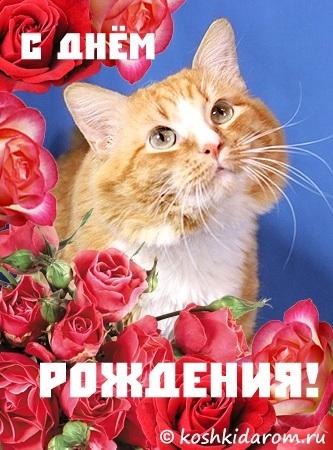 Поздравления с днем рождения открытки кошки013