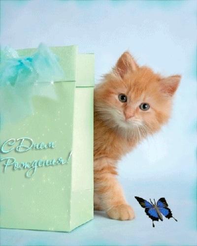 Поздравления с днем рождения открытки кошки014