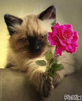 Поздравления с днем рождения открытки кошки015