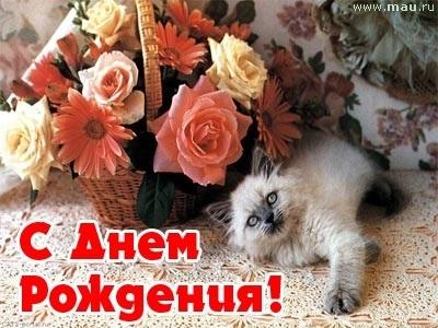 Поздравления с днем рождения открытки кошки016