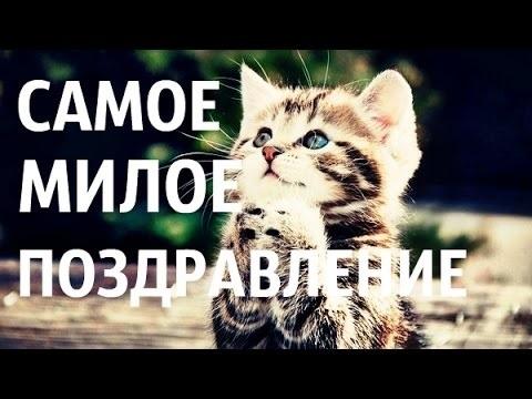 Поздравления с днем рождения открытки кошки018