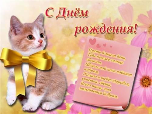 Поздравления с днем рождения открытки кошки019
