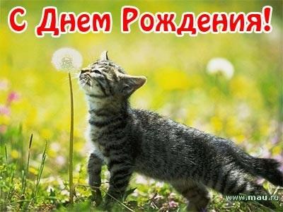 Поздравления с днем рождения открытки кошки020
