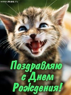 Поздравления с днем рождения открытки кошки021