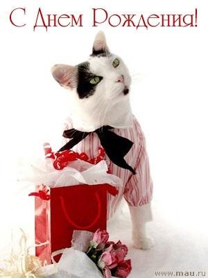 Поздравления с днем рождения открытки кошки022