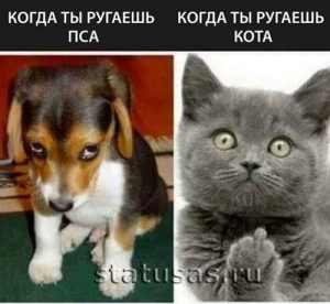 Прикольные фото кошек с надписями 018