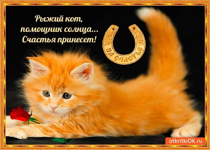 Рыжий кот открытка с днем рождения005