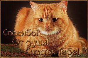 Рыжий кот открытка с днем рождения008