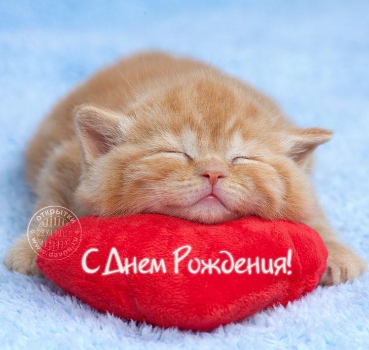 Рыжий кот открытка с днем рождения010