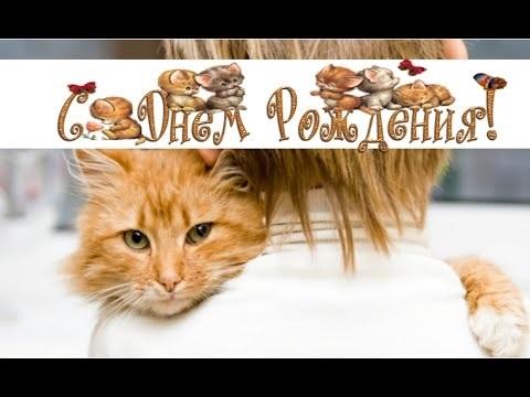 Рыжий кот открытка с днем рождения018
