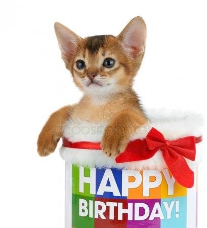Рыжий кот открытка с днем рождения019