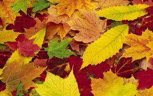 Скачать картинки осень на компьютер 010
