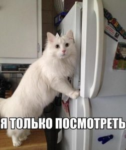 Смешные картинки про котов и кошек 016