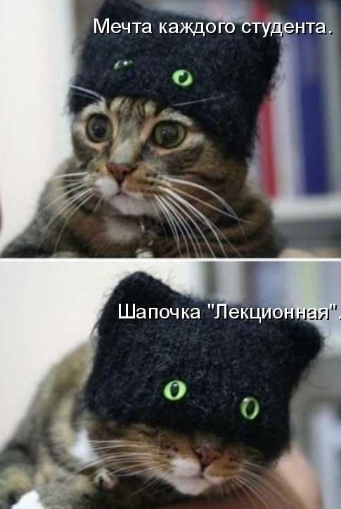 Смешные картинки про котов и кошек 017