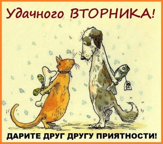 03.08 открытки, картинка утро вторника смешная