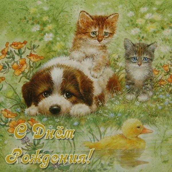 Днем, поздравления с днем рождения открытки животные