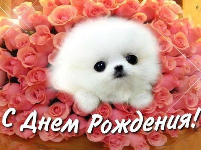 С днем рождения поздравляют животные011