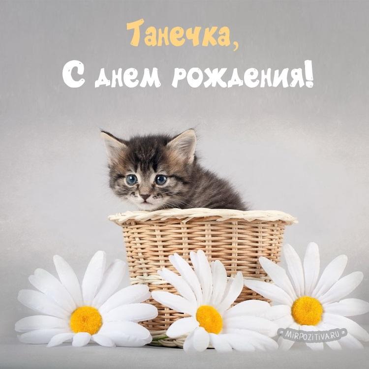 С днем рождения поздравляют животные015