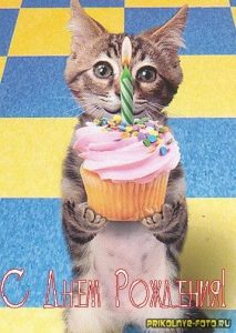 С днем рождения прикольные открытки коты017