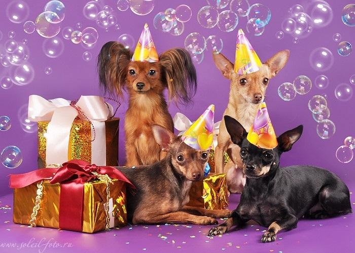 День рождения собаке открытка, поздравления шаблон