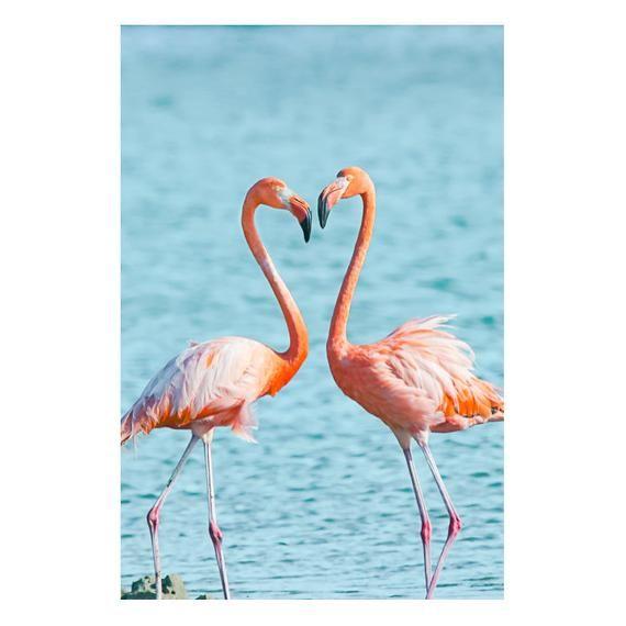 Фламинго обои на айфон красивые и классные (10)