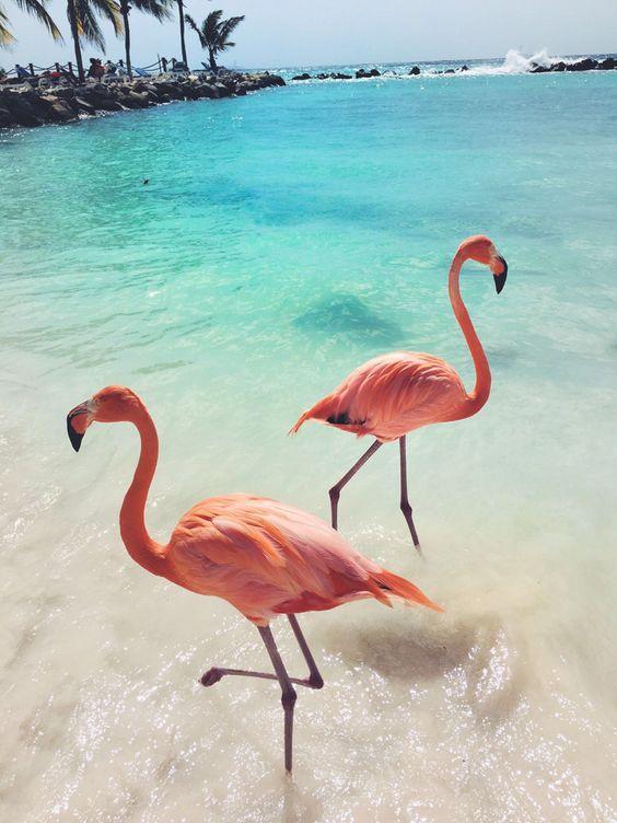 Фламинго обои на айфон красивые и классные (12)