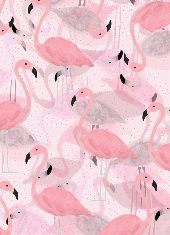 Фламинго обои на айфон красивые и классные (14)
