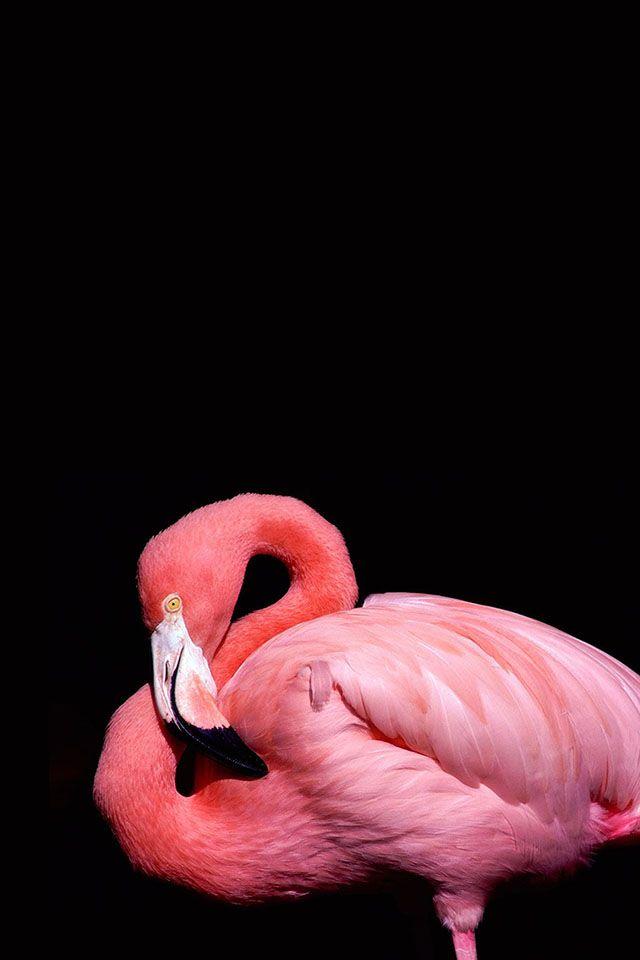 Фламинго обои на айфон красивые и классные (15)