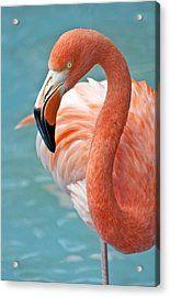 Фламинго обои на айфон красивые и классные (2)