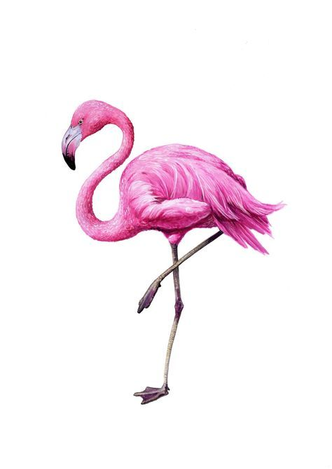 Фламинго обои на айфон красивые и классные (21)