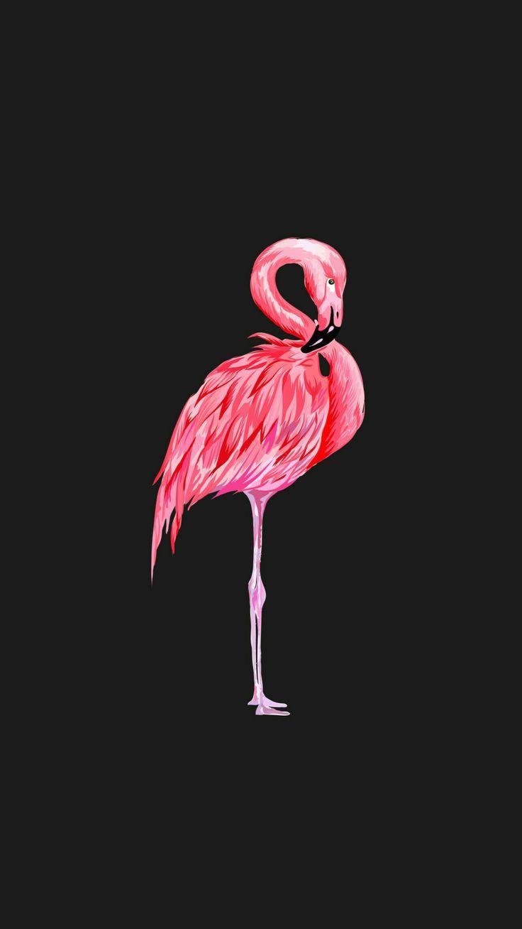 Фламинго обои на айфон красивые и классные (22)