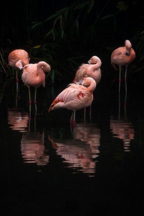 Фламинго обои на айфон красивые и классные (24)