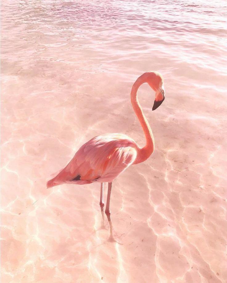 Фламинго обои на айфон красивые и классные (25)