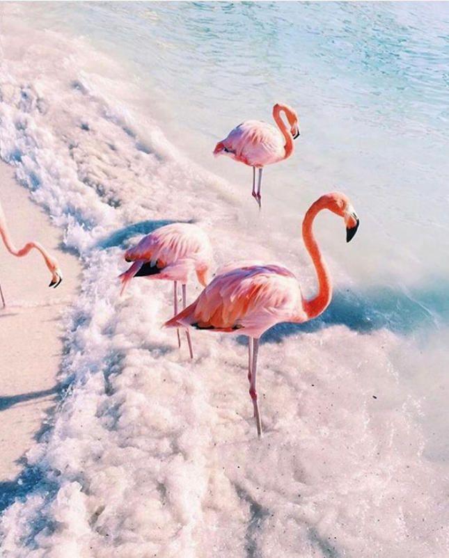 Фламинго обои на айфон красивые и классные (27)