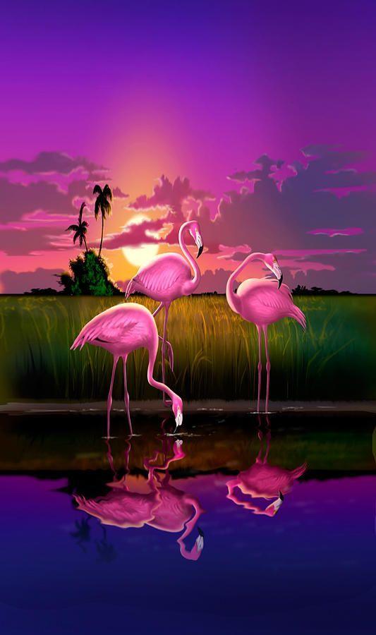Фламинго обои на айфон красивые и классные (3)
