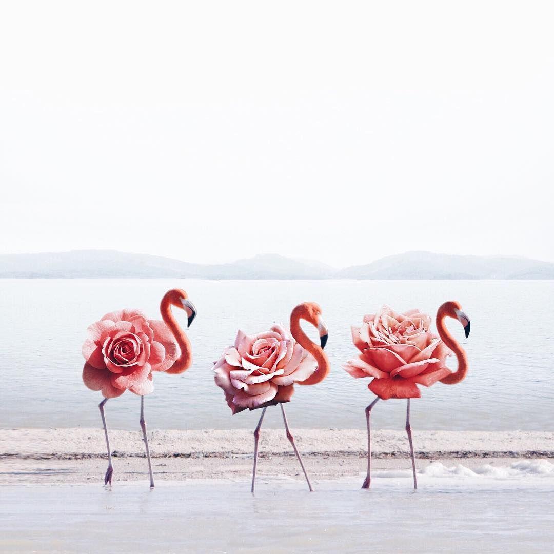 Фламинго обои на айфон красивые и классные (5)